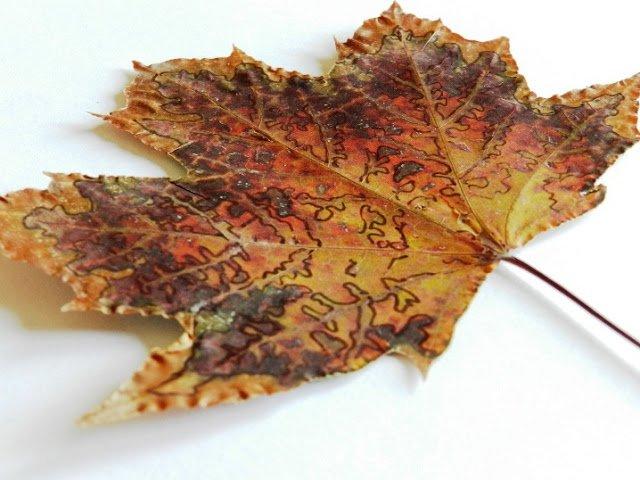 Как сушить листья для поделок 591