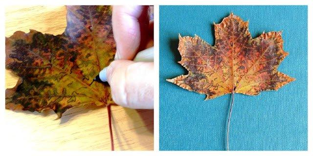 Как сушить листья для поделок 469
